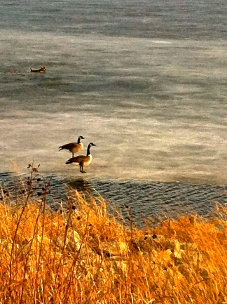 Canadian geese are enjoying Summit Lake. Photo Credit/Denise Gilliland, Editor and Chief, Kat Country Hub.