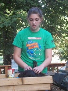 Amelia is working with her rabbit for the fair. Photo courtesy of Amelia Schlichting.