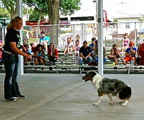 Casey Stone's dog did a good job obeying at the dog show. Photo Credit/Denise Gilliland, Editor and Chief, Kat Country Hub.