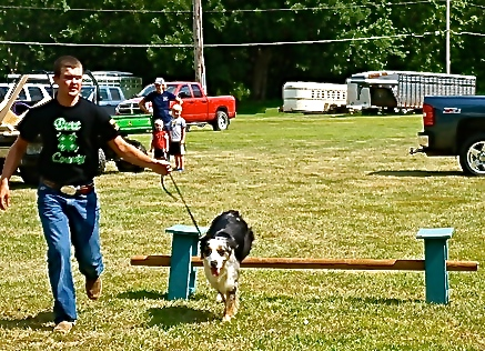 King's dog clears the bar at the dog show. Photo Credit/Denise Gilliland, Editor and Chief, Kat Country Hub.