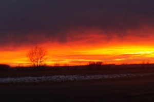 Beautiful sunset by Oakland this evening. Photo Credit/Denise Gilliland, Editor and Chief, Kat Country Hub.