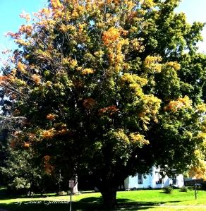 fall tree 9-24-14