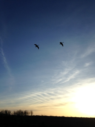 Two Canadian Geese flying over the Logan Creek in Oakland NE. Photo Credit/Denise Gilliland, Editor and Chief, Kat Country Hub.
