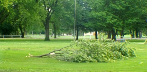 Trees and branches are down in the Oakland park and throughout Oakland as a result of a storm that produced strong winds, rain and small hail later last evening. All photos credit of Denise Gilliland/Editor and Chief, Kat Country Hub.