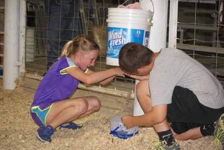 "The Burt County 4-H Council sponsored the Ag Olympics again at the fair on Monday evening, August 10. Bailey Pelan and Tavis Uhing take their turn at the ""Goat Milking Contest."" This consisted of a 5 gallon bucket filled with water with two rubber nipples out of the bottom of the bucket simulating the teats of a goat. The teams raced against each other to see how much ""milk"" they could get in their team bucket in the time allotted.  Photo Credit/Mary Loftis, Extension Assistant."