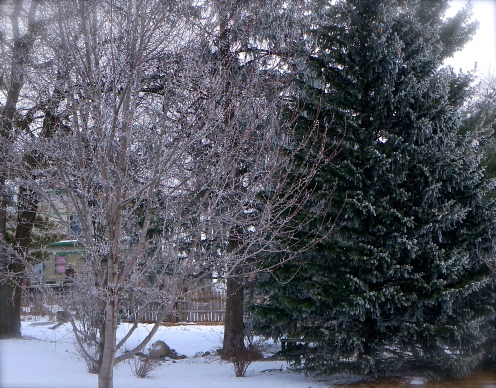 The trees were sparkling with frost, creating a beautiful sight. Photo Credit/Denise Gilliland, Editor and Chief, Kat Country Hub.