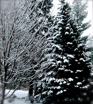 The Oakland area received a reminder that winter is still here! A few inches of wet, heavy snow greeted everyone Friday morning, leaving a coating, not only on yards but also on trees. Photo Credit/Denise Gilliland, Editor and Chief, Kat Country Hub.