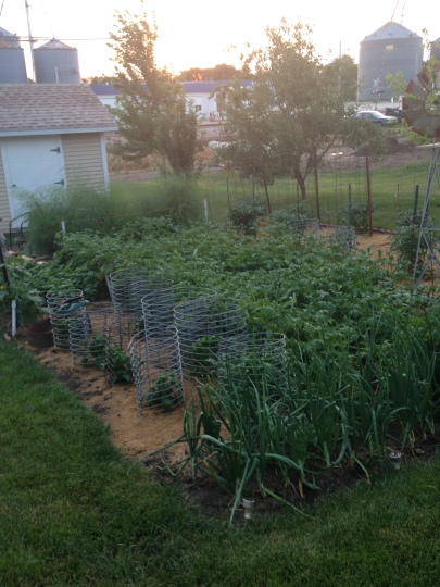 Our garden. It is really thriving! Photo Credit/Denise Gilliland, Editor and Chief, Kat Country Hub.