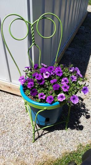 This beautiful flowering plant belongs to Brandy McElroy of Lyons. Isn't is just gorgeous? Summer definitely is a colorful season! Photo courtesy of Brandy McElroy.