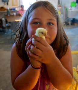 Baby chicks are always a hit with the kids at the Burt County Fair. Photo Credit/Denise Gilliland, Editor and Chief, Kat Country Hub.