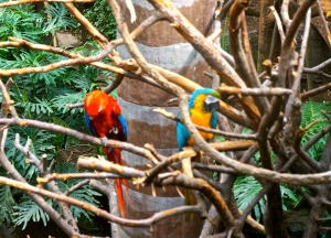 Nothing as beautiful as the Henry Doorly Zoo! All photos credit of Denise Gilliland/Editor and Chief, Kat Country Hub.