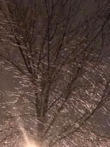 The trees glow from the ice storm. All photo credit/Denise Gilliland, Editor and Chief, Kat Country Hub.